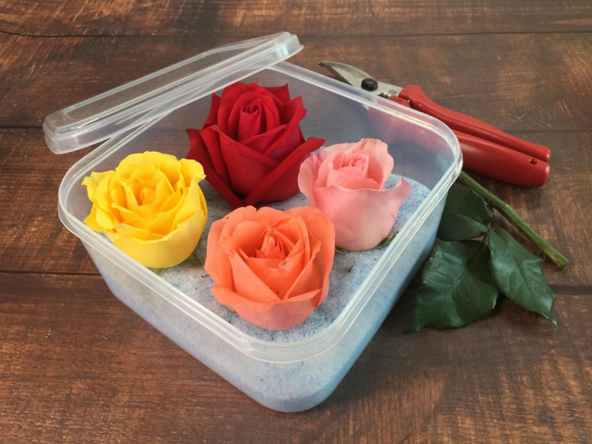 Different Ways of Preserving Flowers